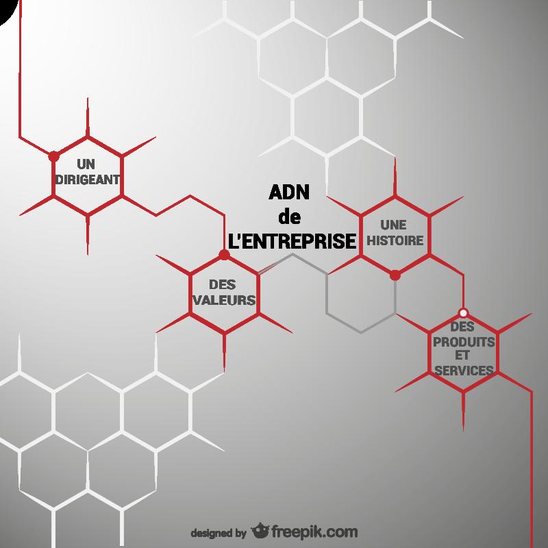 ADN de l'entreprise